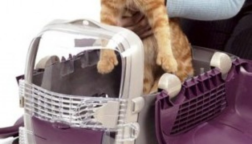 meter a un gato en su transportin
