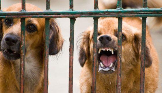 La-rabia-en-los-perros