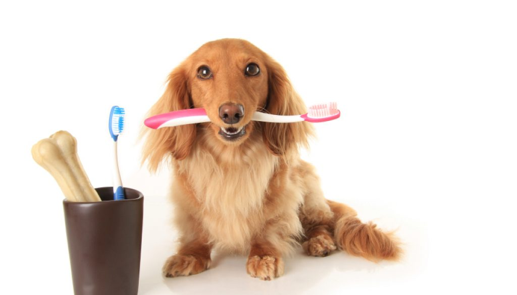 salud bucodental mascotas