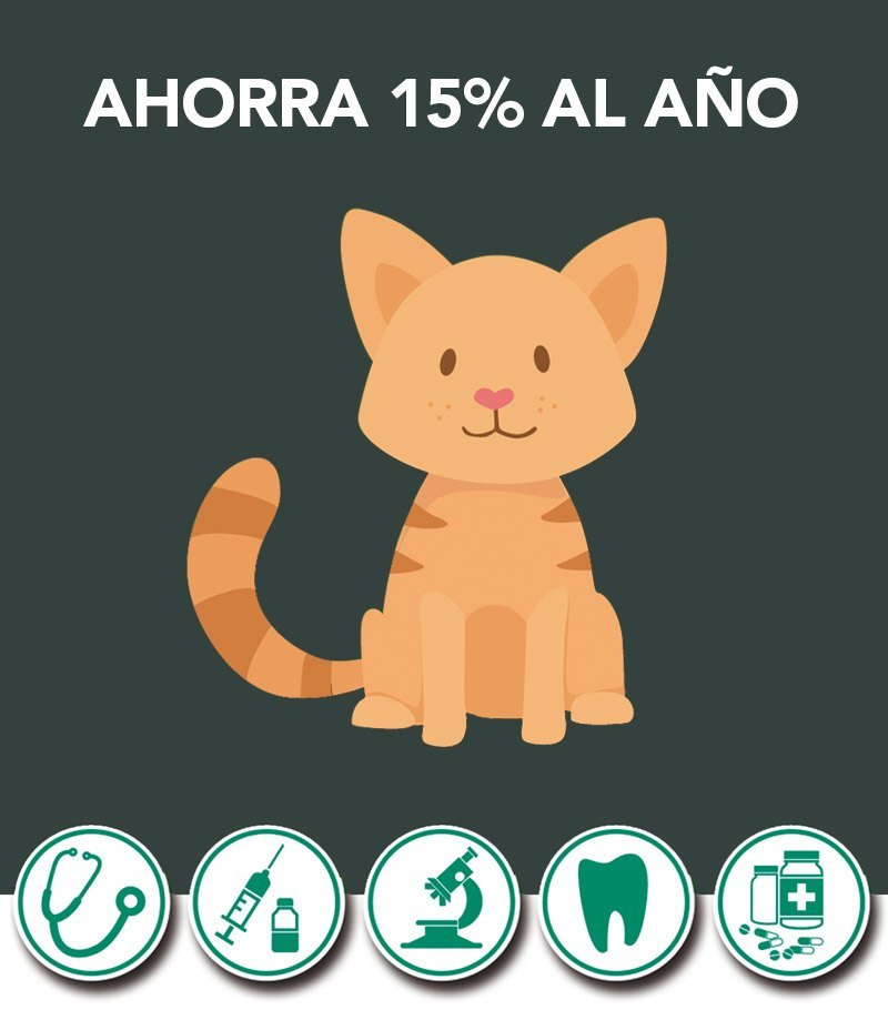 Seguro Veterinario Gatos
