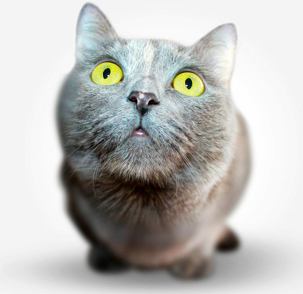 Veterinario Gatos Fuenlabrada