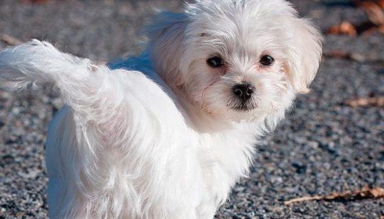 perro vet bienestar